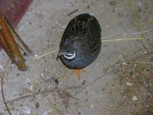 Webove Stranky Pro Zacinajici Chovatele Exotickeho Ptactva Strucne